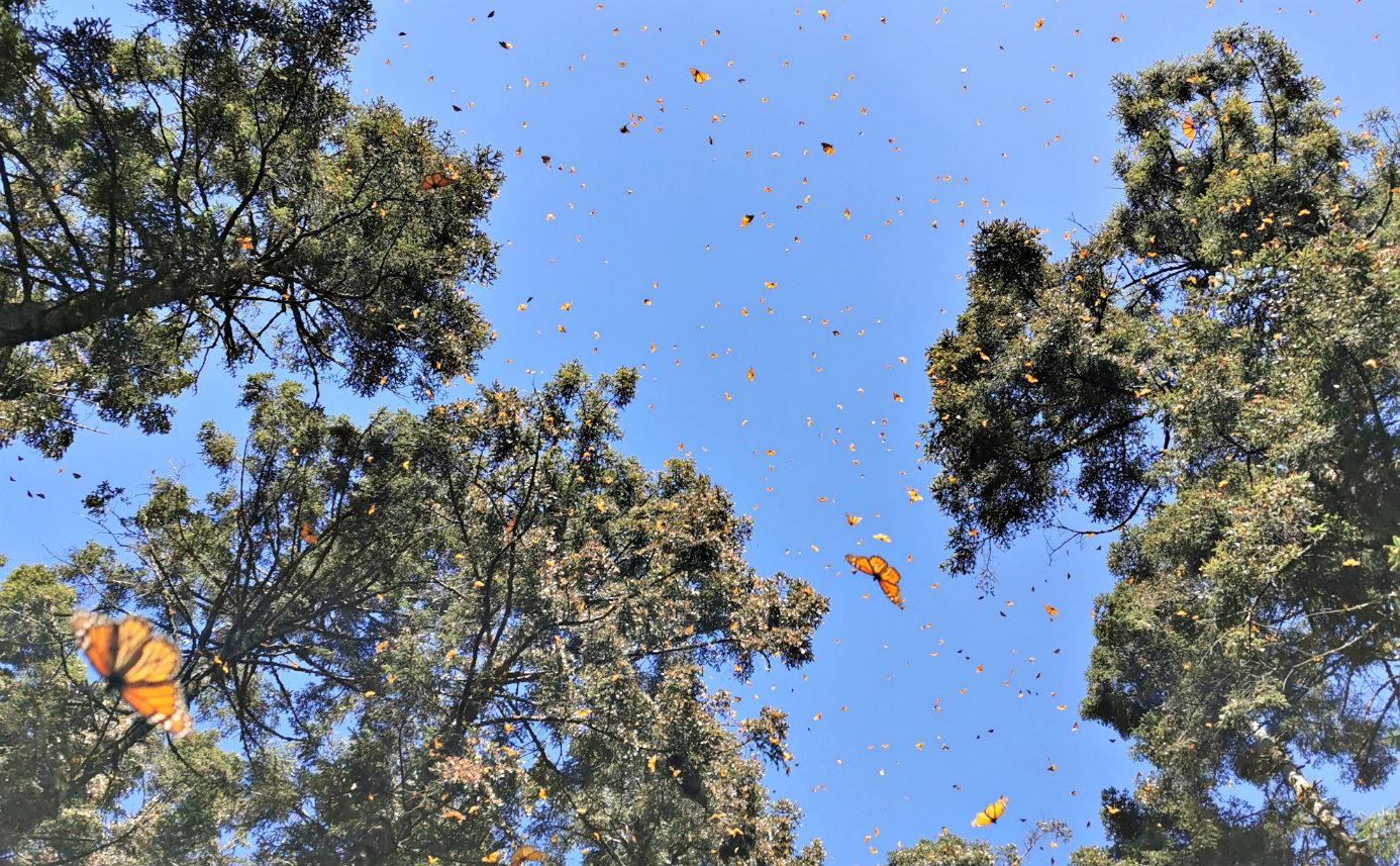 Motyle w Meksyku